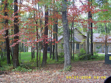 My house in the woods