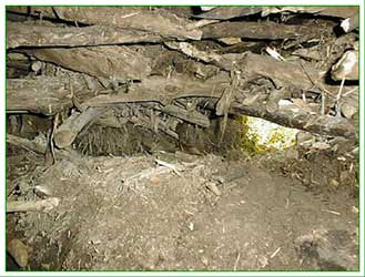 inside the beaver lodge