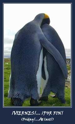 Friday penguins