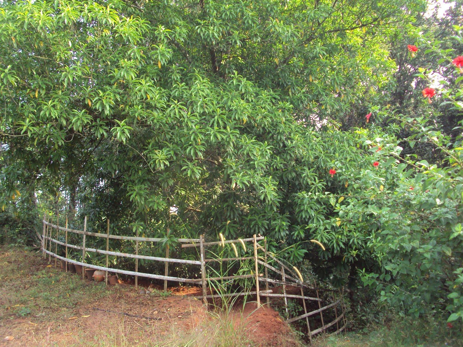 rudraksha%2B11.12.2010%2B008.jpg