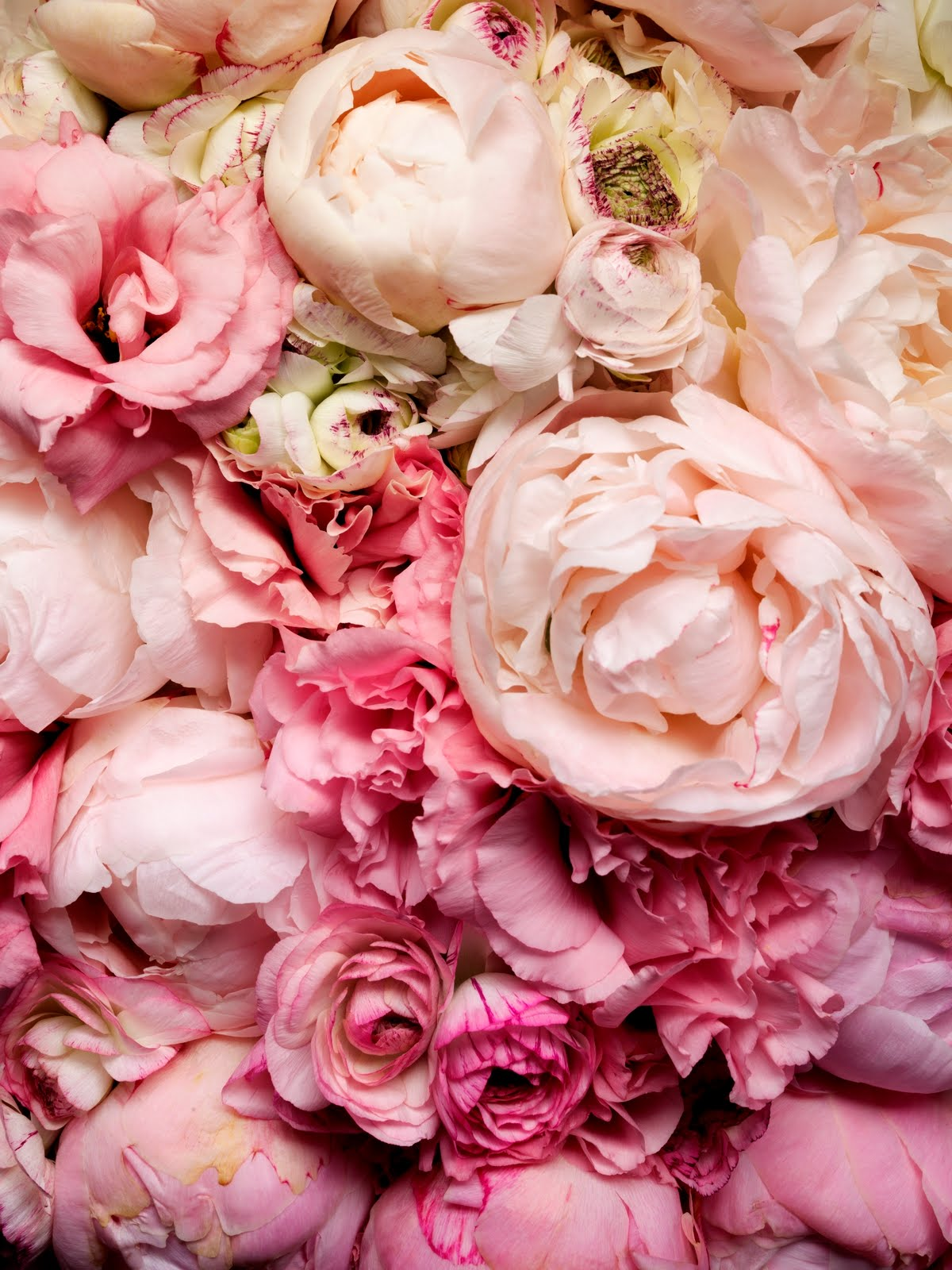 Hiving Out peonies