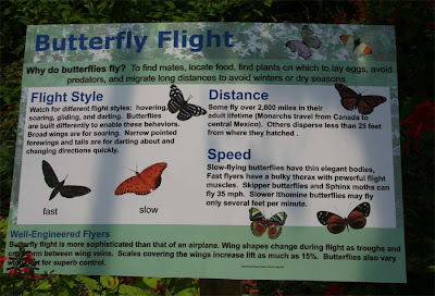 Butterflies Pictures And Information