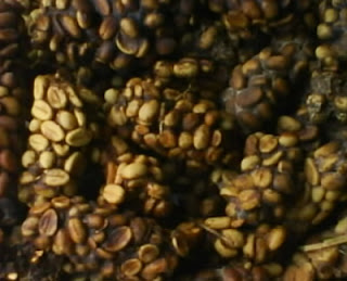 harga kopi luwak