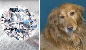 anjing kaya