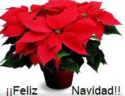 Flor de Navidad