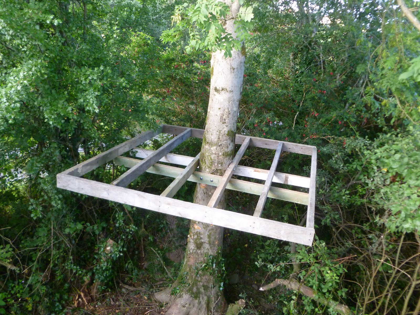 Anyone have experience in building a tree house?