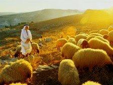 Foto: Pastor de ovelhas