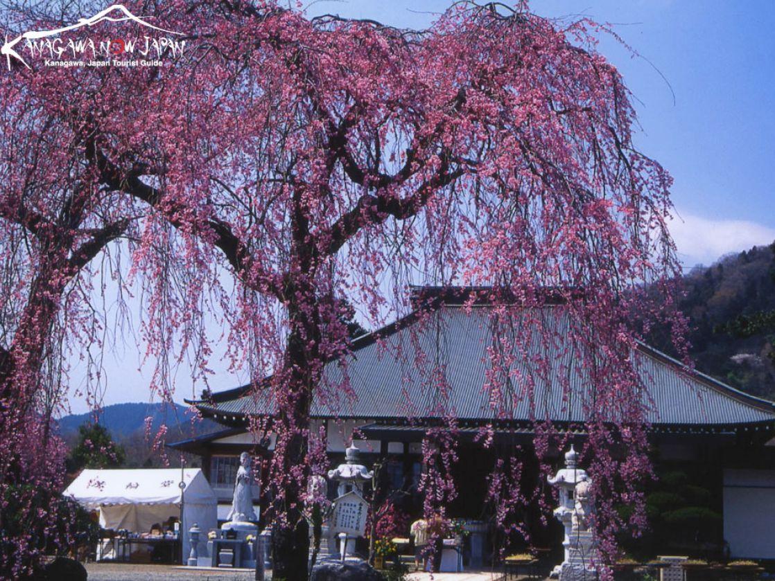 http://1.bp.blogspot.com/_9YRwjzlbruM/TSOoMvaIVbI/AAAAAAAAC1o/GQFRfb1lJUI/s1600/zen-buddhist-wallpaper_12w.jpg