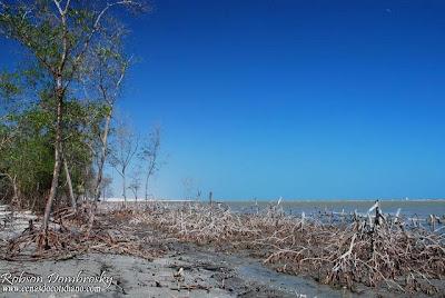 Vegetação de mangue