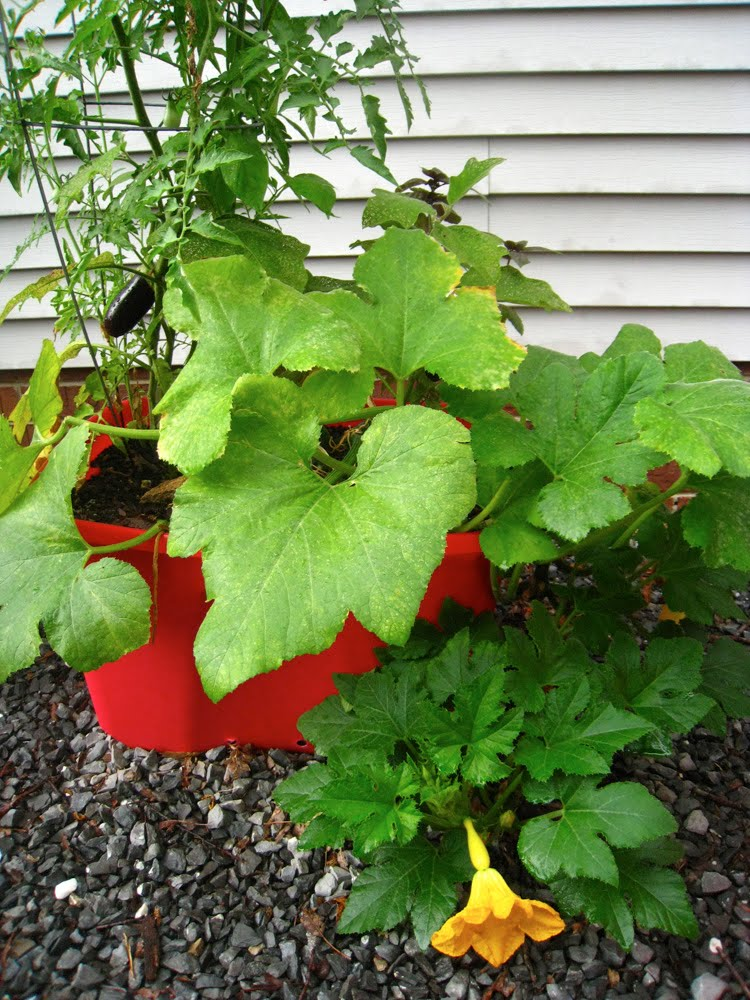 Gardening tips for small spaces growing vegetables in containers revisited - Growing vegetables in a small space concept ...