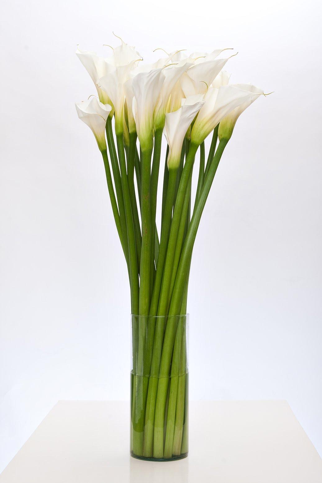Office flower 28
