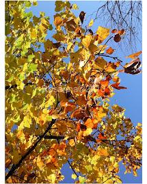 I caldi colori del'autunno