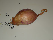 you might think this is a shallot!