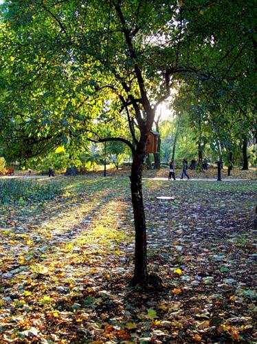 Пройдя по дорожкам парка чувствуешь