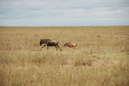 Serengeti Shall Never Die