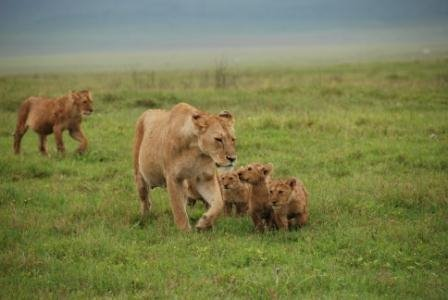 The Ngorongoro Family