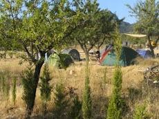 LES CAMPS HIPPIQUES