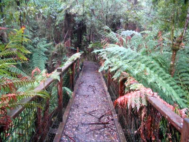 Tracks Trails And Coasts Near Melbourne Tree Fern Loop