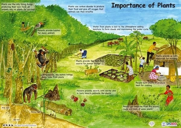 essay importance trees our life Our life is dependent upon trees short paragraph on importance of trees short essay on importance of forests in india.