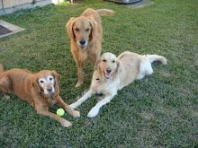 Maddie, Monte, and Kipper