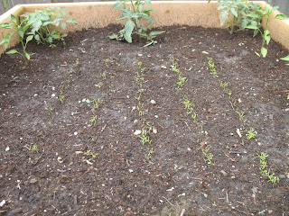 2008: My first sprouts