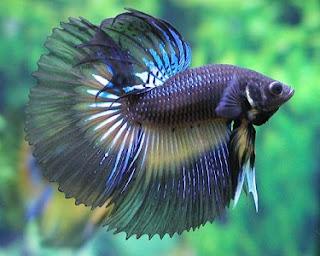Guía de peces tropical