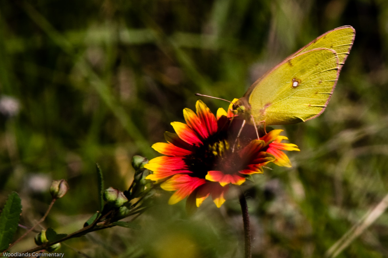 Montco%2BButterfly%2Bcount%2B2010 3437 If you live in the northern part of Austin,Texas or even elsewhere,the ...