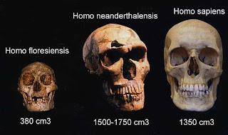 Homo floresiensis, Homo neanderthalensis, Homo sapiens