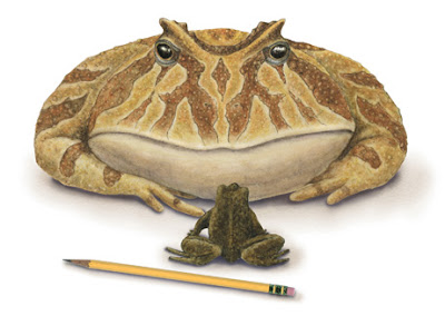 Beelzebufo, sapo do diabo, frog from hell