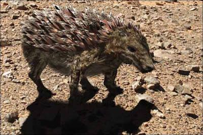 cuirasson animais do futuro evolução