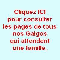 Http Www Adoption Levrier Fr Levrier Galgo Adopter Comment Ca Se Passe