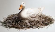 Mama Duck's Nest