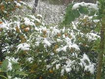 A Neve...