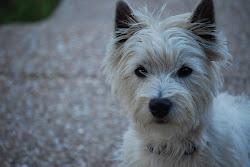 My Dog: Mackie Rae