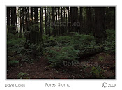 Forest Stump