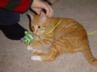rowdy playing with the green mouse