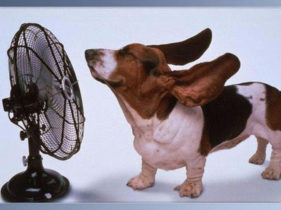 The funny pics funny pictures its too hot here funny for Its hot pics