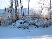 Snow on the bushes