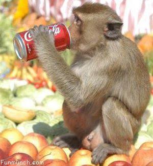 [monkeypop]