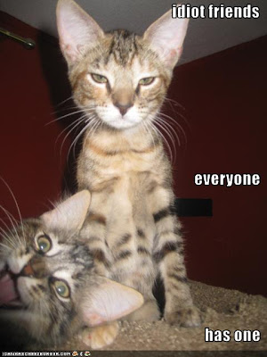 Funny Pictures Of Animals With Captions. funny pictures with captions.