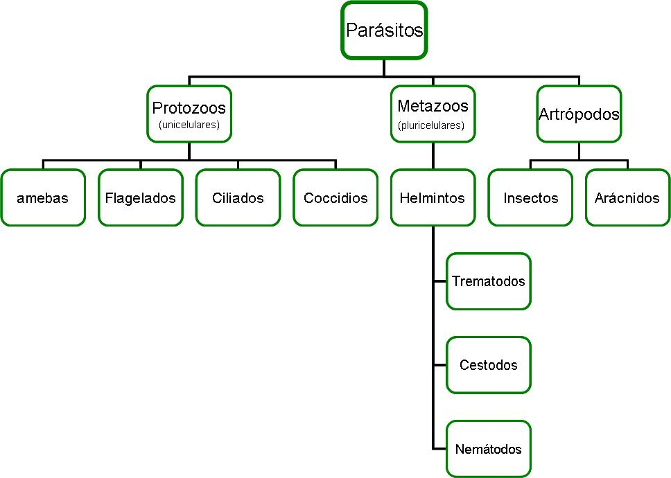 Que análisis dar a la revelación de los parásitos en el intestino