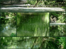 Naturparadies Donau-Auen