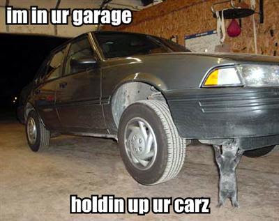 cat holding up car Lolcat Lolcatz Lowlcaz image,