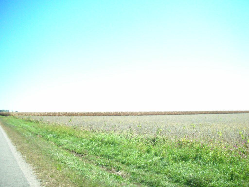 [Field.JPG]