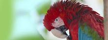 1720 especies de pájaros habitan en la Amazonia peruana