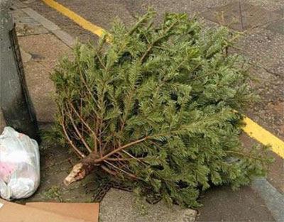 a dead Christmas Tree
