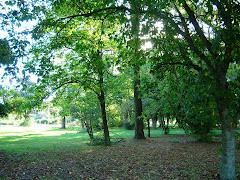Jardín Botánico - Vivero Municipal