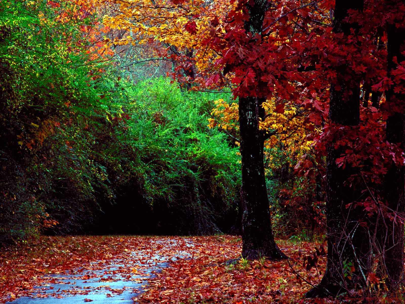 http://1.bp.blogspot.com/_A1Xso1pDrLk/TT3gMfREcyI/AAAAAAAAANs/GhDDROv9jZ4/s1600/Autumn_Forest_and_Landscape_Color%255B1%255D.jpeg