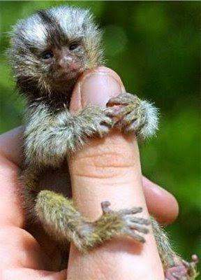 Hewan Hewan terlucu dan terimut.. :) Cutest_smallest_animals_20