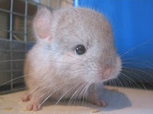 Cutest Baby Mouse Ever